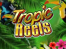 Играть online в аппарат Тропические Барабаны